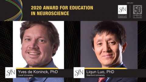 Yves De Koninck wins SfN Education Award